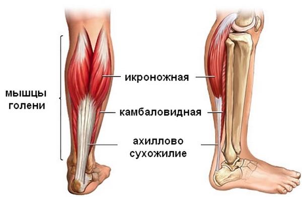 анатомія гомілковостопного суглобу
